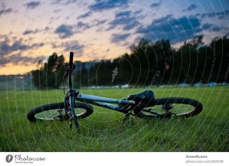 Himmel Natur blau grün Landschaft gelb Park Fahrrad Schönes Wetter Fahrradfahren sportlich Wolkenloser Himmel