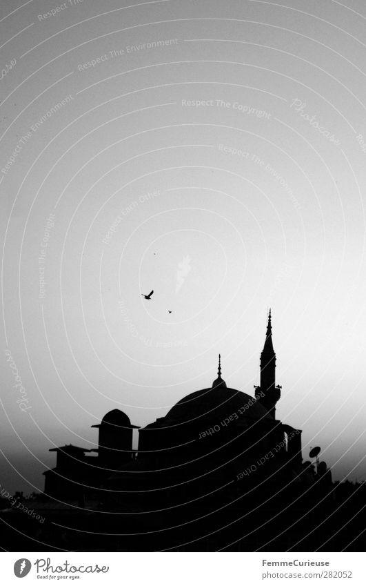 Mosque. Stadt Hauptstadt Hafenstadt Gebäude Architektur Sehenswürdigkeit Denkmal Glaube Religion & Glaube Moslem Moschee Istanbul Türkei Skyline Vogel