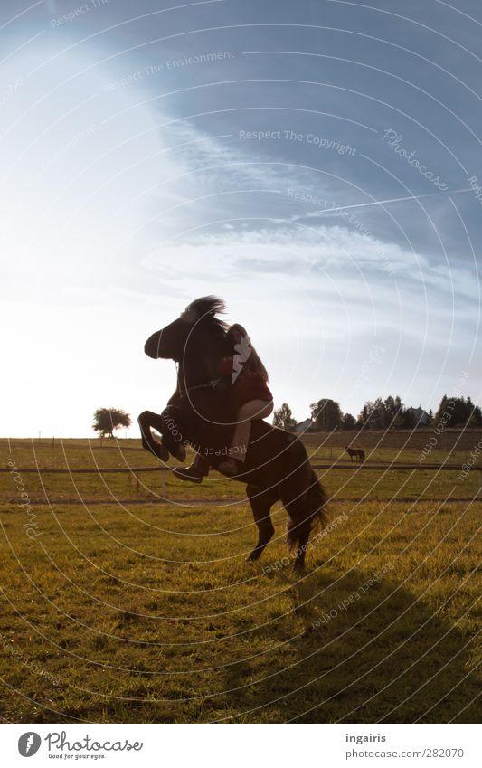 Tempramentvoller Isländer Reiten Reitsport feminin 1 Mensch Natur Landschaft Luft Himmel Wolken Sonne Sonnenlicht Wiese Tier Pferd Island Ponys Bewegung