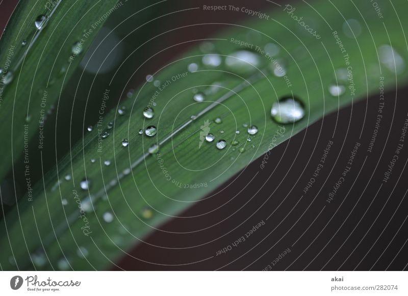 Tears of Nature...... Pflanze Wasser Wassertropfen Herbst Regen Blatt Topfpflanze nass grün schwarz Mitgefühl trösten Traurigkeit Trauer Vergänglichkeit