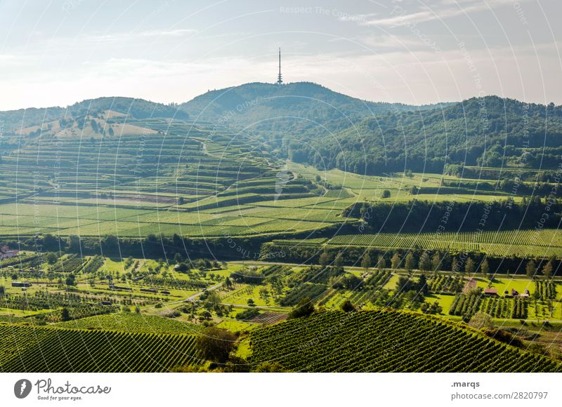 Kaiserstuhl (Totenkopf) Natur Landschaft Himmel Sommer Schönes Wetter Hügel Terrassenfelder Wein Erholung Tourismus Farbfoto Außenaufnahme