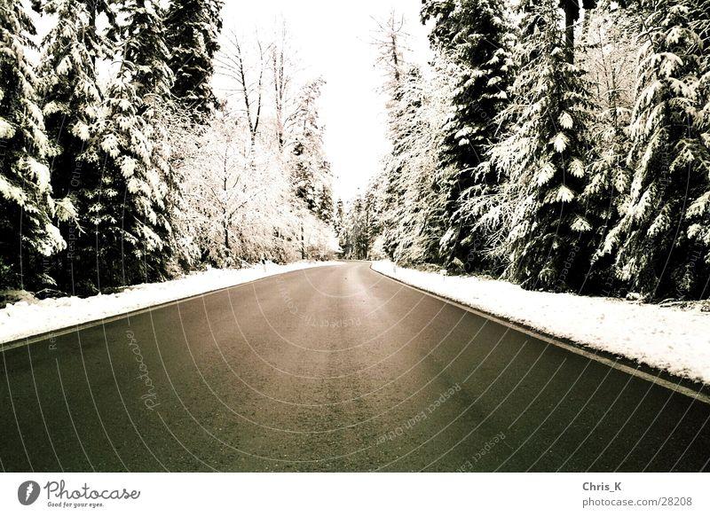 die Spur eines Winters kalt Wald Schnee Monochrom Straße Schwarzweißfoto