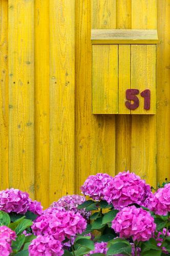 51 Farbe Blume gelb Häusliches Leben Ziffern & Zahlen violett ökologisch Post Briefkasten Holzwand