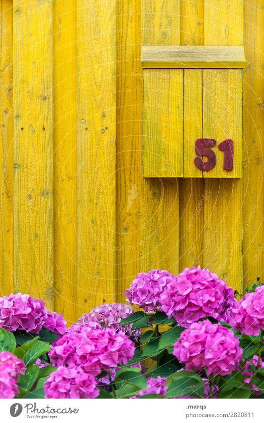 51 Häusliches Leben Blume Holzwand Briefkasten Post Ziffern & Zahlen gelb violett Farbe ökologisch Farbfoto Außenaufnahme Strukturen & Formen Menschenleer