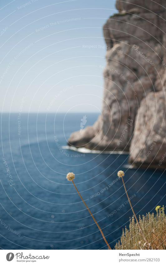Capo Caccia Umwelt Natur Landschaft Pflanze Himmel Wolkenloser Himmel Schönes Wetter Blume Gras Küste Meer blau grau Kap Klippe Mittelmeer Italien Sardinien