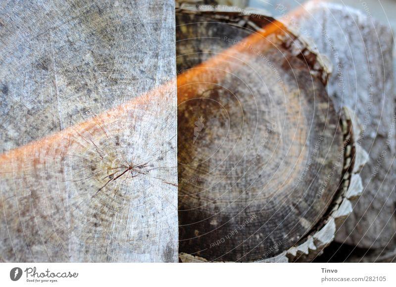 abgelagertes Holz Natur trocken grau Brennholz verwittert Baumstamm zersägt Querschnitt Jahresringe Totholz Gedeckte Farben Außenaufnahme Nahaufnahme
