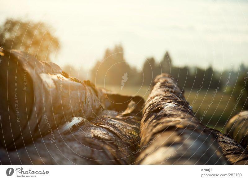 Herbst Natur Baum Landschaft Umwelt Wärme natürlich Schönes Wetter Baumstamm