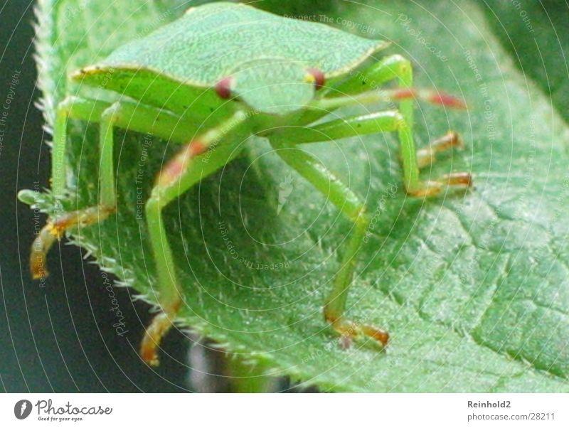 Käfer in Grün Ferne Garten Verkehr Antenne Zufall