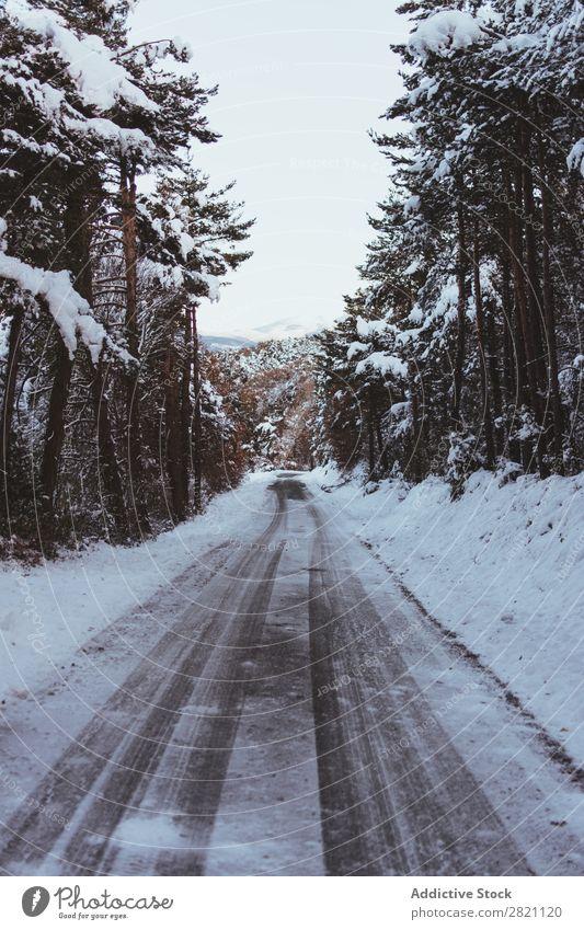 Straße im Wald im Schnee Winter kalt Asphalt Landschaft weiß Natur Jahreszeiten Eis Frost Laufwerk Ferien & Urlaub & Reisen gefroren Wetter Länder ländlich