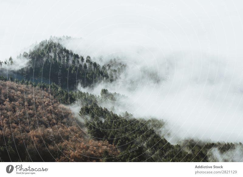 Berge und neblige Wälder Wald Nebel Herbst Natur Berge u. Gebirge Hügel bedeckt Licht Landschaft Morgen Jahreszeiten Blatt schön Wetter Länder Park mehrfarbig