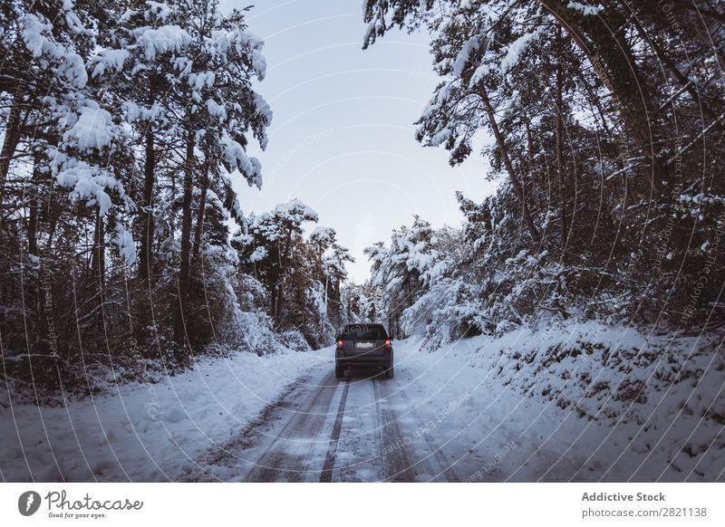 Offroader im Wald PKW Straße Winter Schnee kalt Landschaft weiß