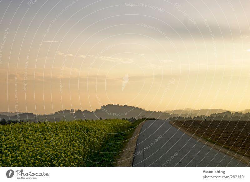 die Straße in den Abend Umwelt Natur Landschaft Pflanze Luft Himmel Wolken Sonne Sonnenaufgang Sonnenuntergang Herbst Wetter Schönes Wetter Wärme Blume Gras
