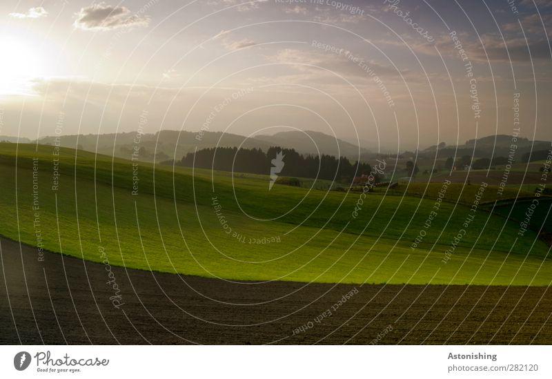am Abend Umwelt Natur Landschaft Pflanze Erde Luft Himmel Wolken Horizont Sonne Herbst Wetter Schönes Wetter Baum Gras Sträucher Nutzpflanze Wiese Feld Wald