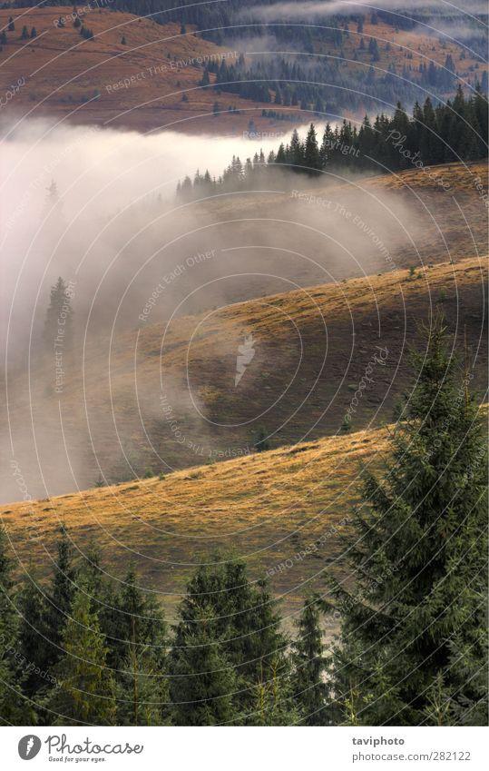 Natur schön Baum Farbe Wolken Landschaft schwarz Wald Umwelt dunkel Berge u. Gebirge Luft wild Nebel Beautyfotografie Hügel