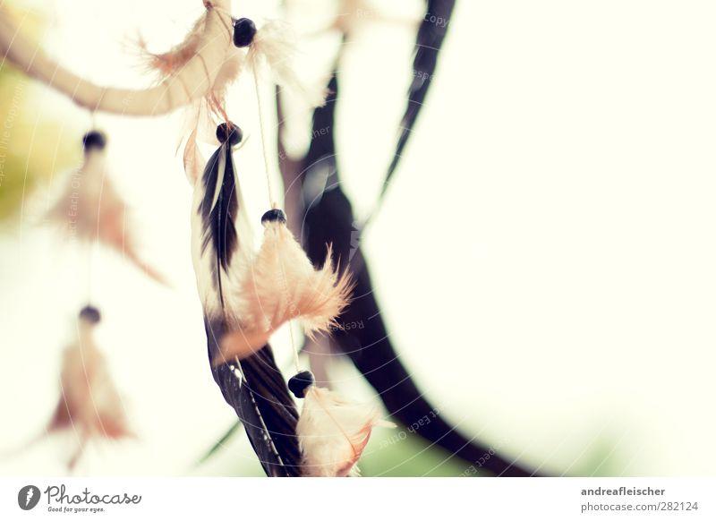 des traumes fänger. grün Wolken schwarz gelb Gefühle Religion & Glaube Holz Vogel träumen Luft Wind Dinge schlafen Schutz Metallfeder Tiefenschärfe