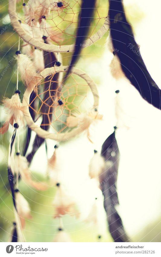 des traumes fänger. die zweite. Natur Baum Religion & Glaube Holz träumen Luft Wind Kreis schlafen Schutz Metallfeder Netz Kugel fangen heilig wehen