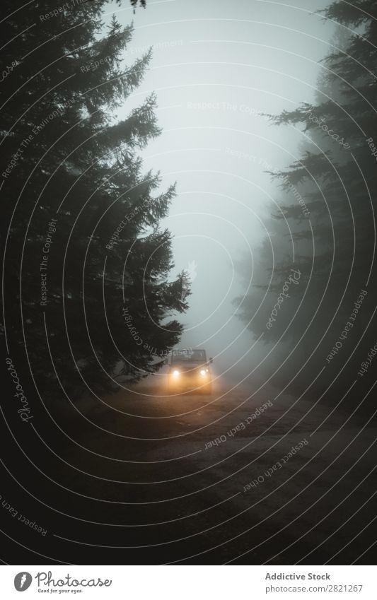 Auto auf nebliger Straße PKW Nebel Wetter Fahrzeug Ferien & Urlaub & Reisen Risiko dunkel Verkehr Asphalt Laufwerk nass Jahreszeiten Scheinwerfer Richtung