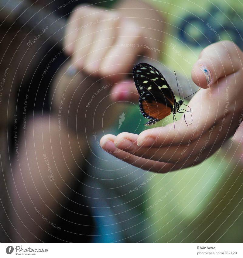 magic moment Hand Schmetterling Zoo 1 Tier Glück ruhig Nahaufnahme Schwache Tiefenschärfe Tierporträt