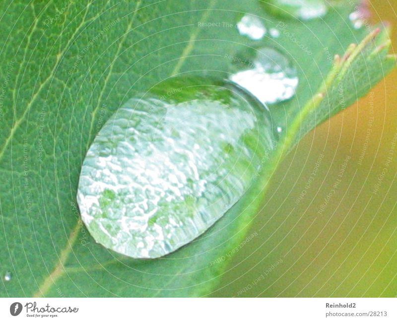 Wasser Blatt grün Garten Seil Wassertropfen