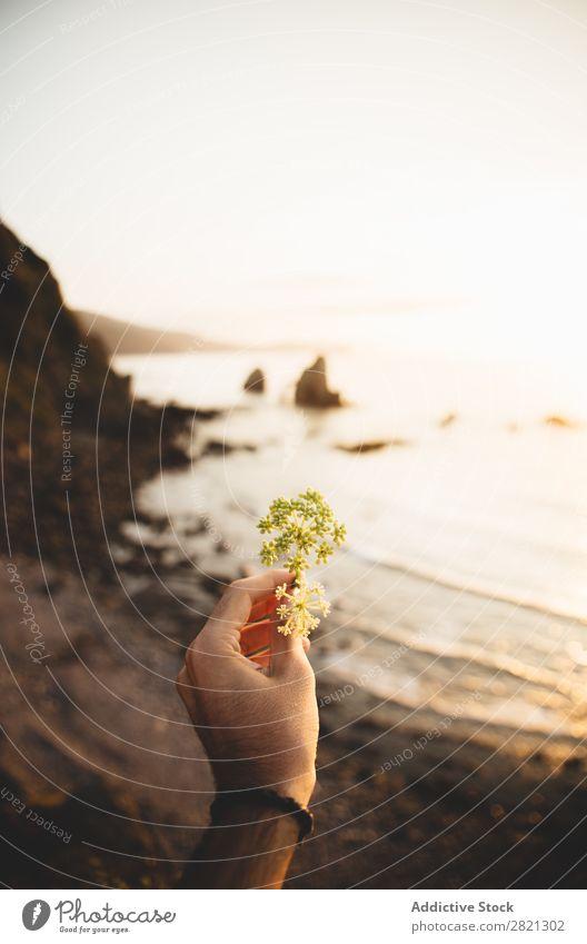 Hand haltende Blume am Meer Mensch Mann klein Blütenblatt