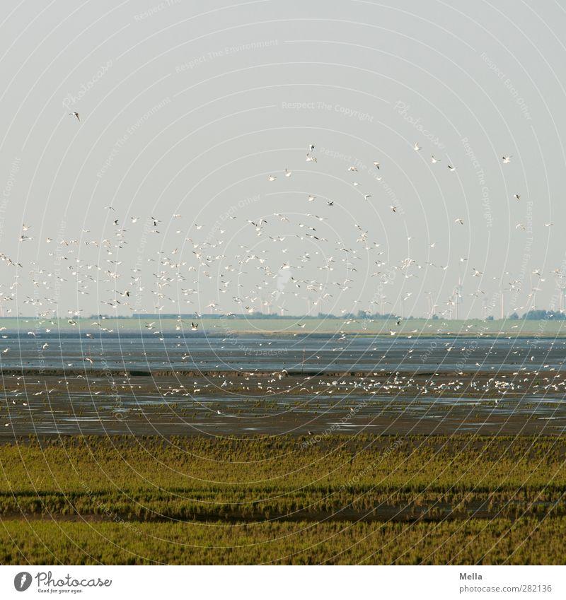 Auf in eine neue Woche Umwelt Natur Landschaft Tier Erde Luft Küste Nordsee Wattenmeer Vogel Möwe Tiergruppe Schwarm fliegen frei Zusammensein natürlich