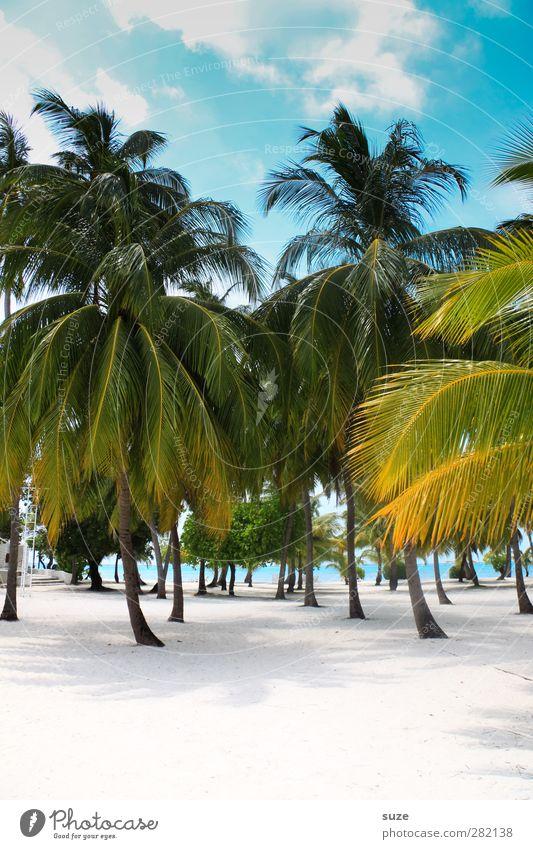 Palmo-live! Lifestyle Wellness Erholung Ferien & Urlaub & Reisen Tourismus Freiheit Sommerurlaub Strand Umwelt Natur Himmel Wolken Schönes Wetter Meer blau grün