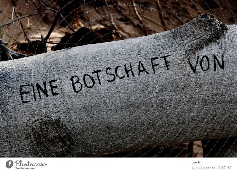 Botschaft Baum Holz Zeichen Schriftzeichen Ziffern & Zahlen Schilder & Markierungen Graffiti Information Hinweis Kommunizieren schreiben grau Gedeckte Farben