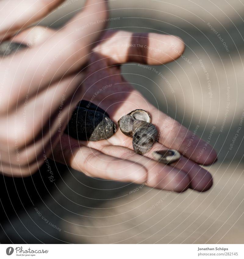 Strandsammler Mensch maskulin Hand Finger 1 Erholung Muschelschale Stein ansammeln Strandgut Sammlung Leidenschaft klein Muschelform Sonnenlicht