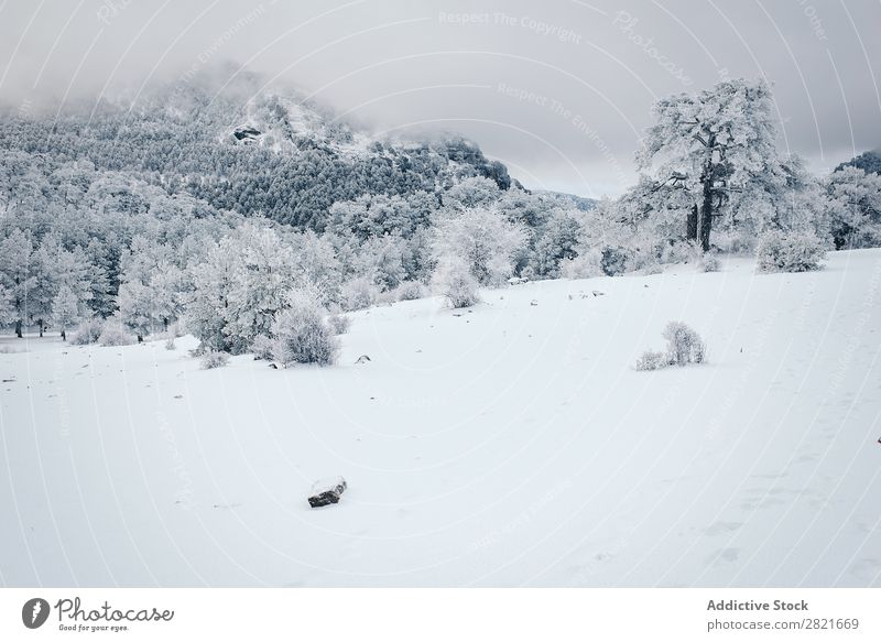 Erstaunliche Winterlandschaft Landschaft Aussicht Frost Baum abgelegen kalt gefroren überdeckt geschneit Schnee Landen Natur natürlich Ferien & Urlaub & Reisen