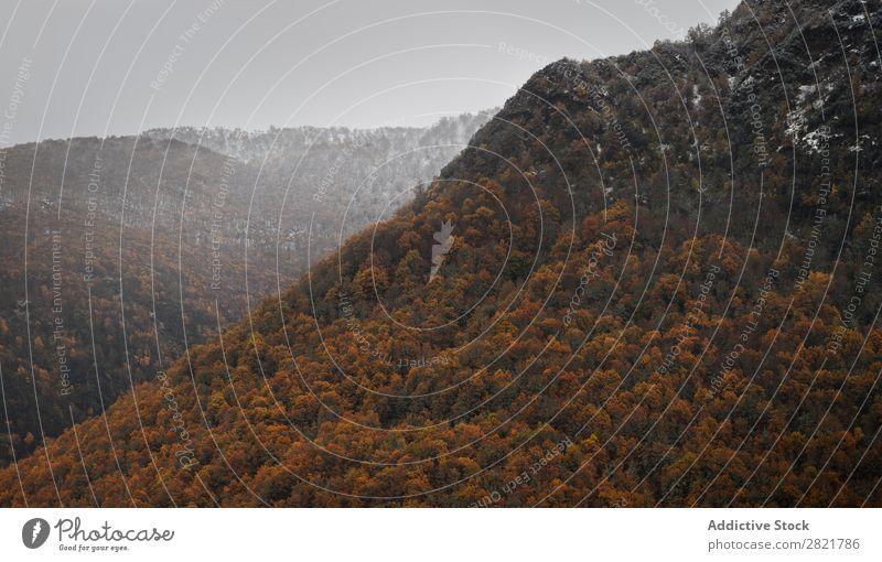 Berg mit Herbstpflanzen Berge u. Gebirge Pflanze Hügel Felsen Natur Landschaft Jahreszeiten schön natürlich mehrfarbig rot Orange Länder Blatt Wald ländlich