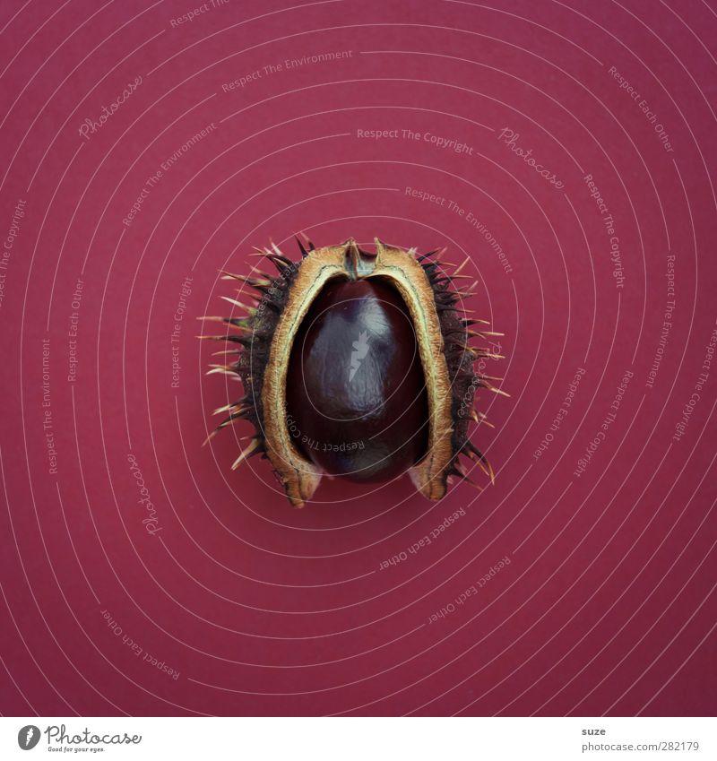 BIO-Überraschungsei feminin Herbst Zeichen außergewöhnlich Erotik glänzend klein rund Spitze stachelig braun Kastanie fruchtbar Stachel reif Mitte Hülle