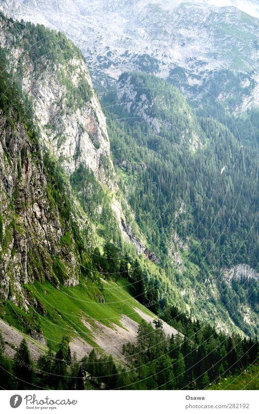 Hanauerlaubwand Natur Ferien & Urlaub & Reisen Sommer Pflanze Baum ruhig Landschaft Wald Ferne Berge u. Gebirge Bewegung Freiheit Stein Felsen Erde