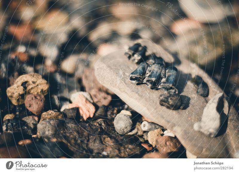 der Rest vom Fest Umwelt Natur braun Stein Strand Steinstrand Küste Skelett Fossilien Tod Sammlung steinig mehrfarbig trist Vergänglichkeit Verwirbelung grausam