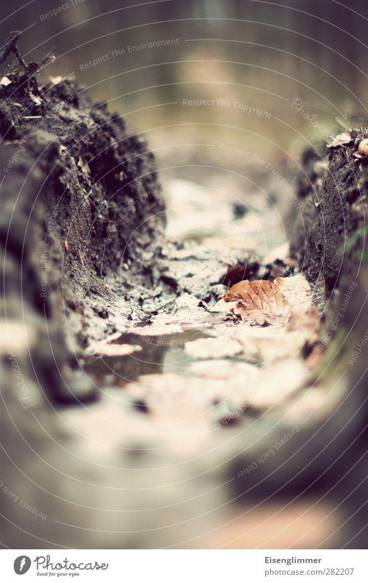 furchen foto Blatt Wald Herbst Feld Erde dreckig nass Landwirtschaft Furche Reifenspuren