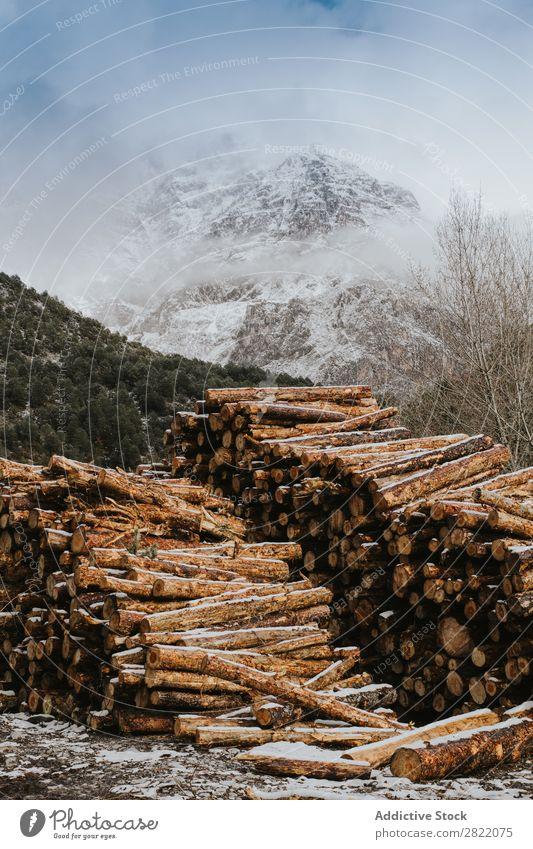 Hölzer gestapelt und vorbereitet Rüssel Holz Brennstoff Stapel Baum Totholz Nutzholz Brennholz geschnitten Natur natürlich Anhäufung Material rau Wald Industrie