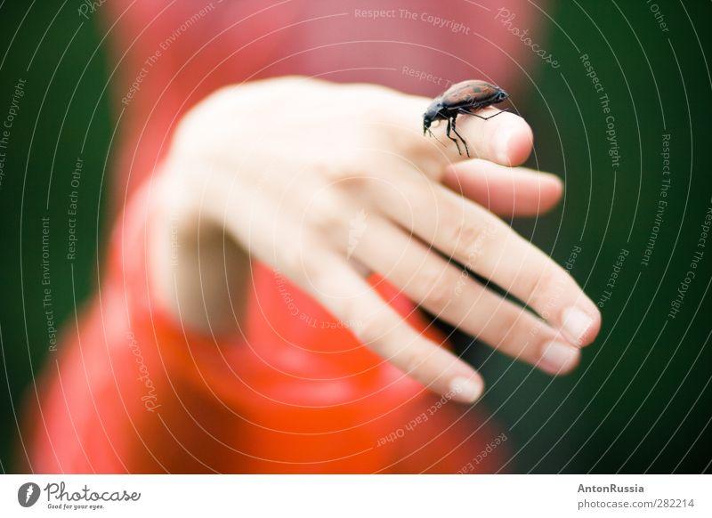 Hand Käfer natur elegant exotisch Gesundheit Mensch feminin Junge Frau Jugendliche Erwachsene Finger 1 13-18 Jahre 18-30 Jahre Umwelt Natur Tier frei schön grün