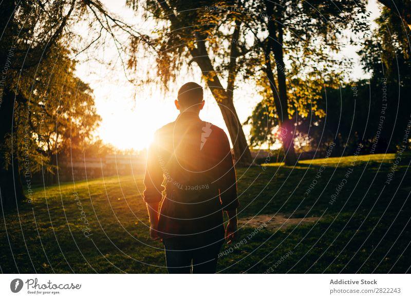 Junger Mann im sonnigen Park Jugendliche Rasen Gras Sommer Glück Lifestyle grün Natur Freizeit & Hobby heiter Baum Sonnenstrahlen Lächeln Freude Mensch hell