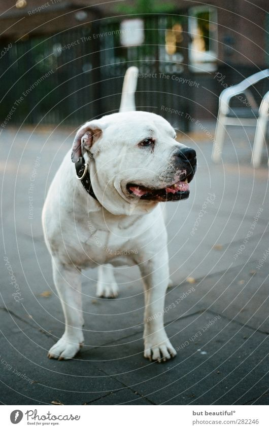 selbstportrait° Tier Haustier Hund 1 sportlich außergewöhnlich elegant Freundlichkeit Fröhlichkeit Originalität positiv rebellisch Vertrauen Sicherheit
