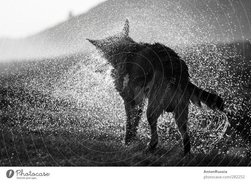 Hund Natur Wasser Tier Umwelt Regen stehen Schönes Wetter Haustier