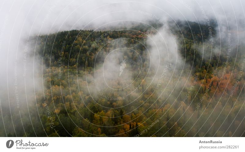 Natur Baum Landschaft Wald Umwelt Herbst Regen Nebel Hügel Klimawandel schlechtes Wetter