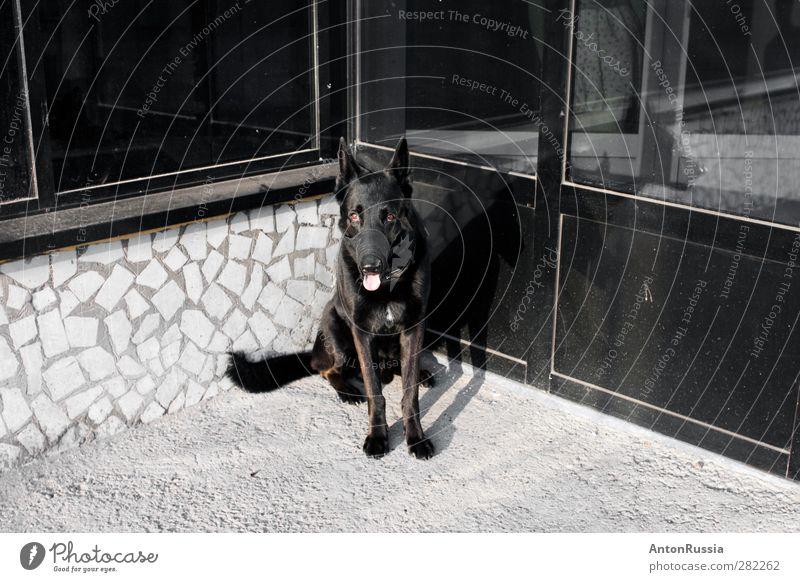 Hund Stadt Mauer Wand Fassade Tier Haustier 1 sitzen Farbfoto Schwarzweißfoto Gedeckte Farben Außenaufnahme Experiment Menschenleer Tag Kontrast