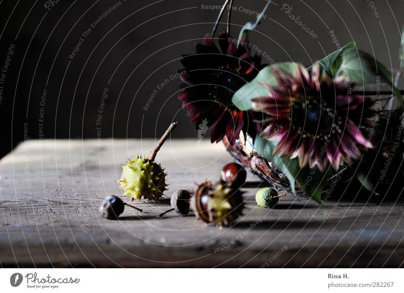 HerbstStill Blume Herbst Blüte natürlich Frucht authentisch Wandel & Veränderung Vergänglichkeit Ernte Stillleben Sonnenblume Korb Kastanie Holztisch Eicheln