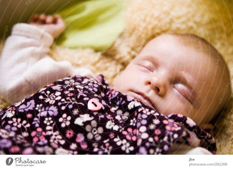 8 Wochen Zufriedenheit Erholung ruhig Bett Babybett Fell feminin Kleinkind Gesicht 1 Mensch 0-12 Monate Body Kleid Herz Blume rosa kurzhaarig liegen schlafen