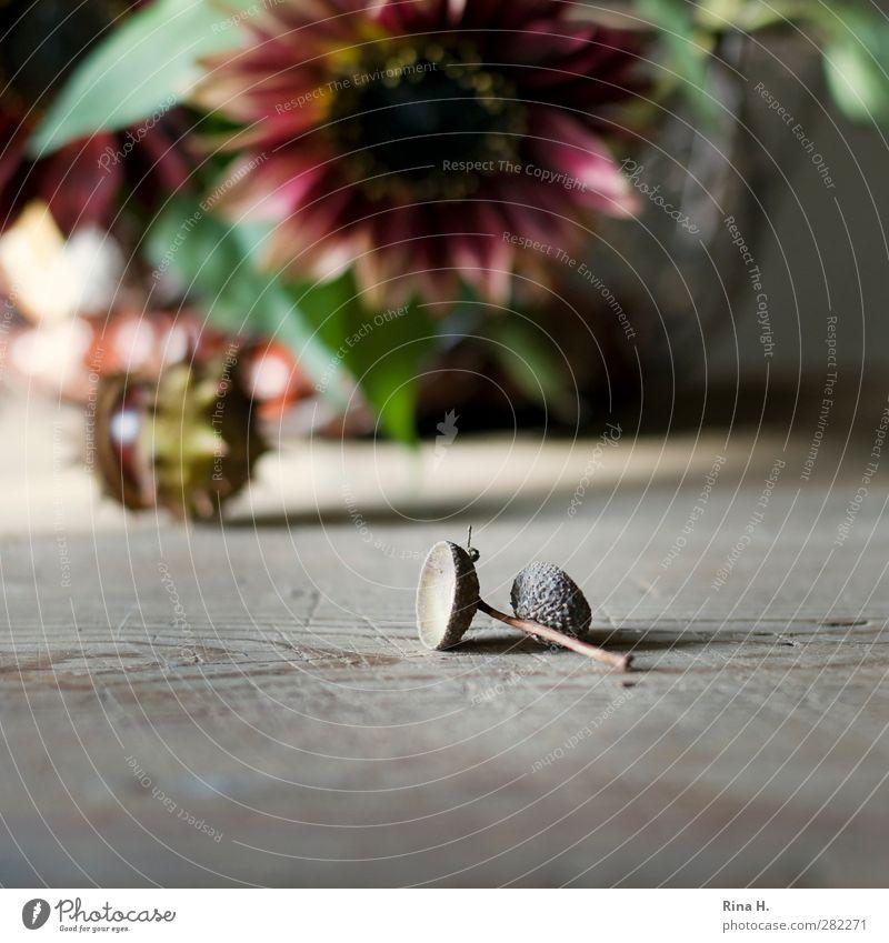 HerbstStill II Blume Blatt Blüte authentisch natürlich Wärme Vergänglichkeit Wandel & Veränderung Kastanie Eicheln Sonnenblume Holztisch Stillleben Farbfoto