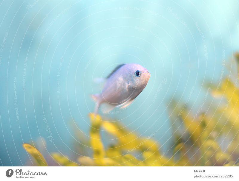 Unterwasser Wasser Korallenriff Meer Tier Fisch 1 Schwimmen & Baden Zierfische Aquarium Farbfoto mehrfarbig Nahaufnahme Unterwasseraufnahme Menschenleer