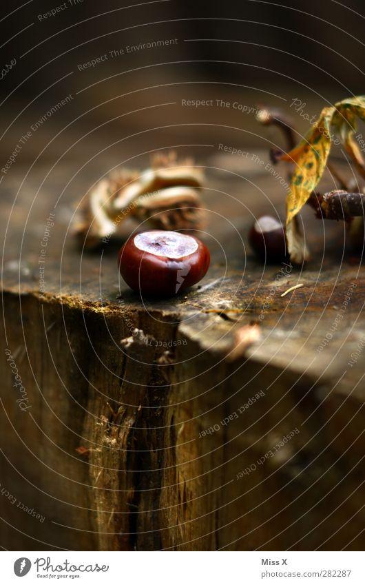 Kastanie Natur Herbst Baum Wald braun Herbstlaub herbstlich Herbstwald Holz Baumstamm Farbfoto Außenaufnahme Nahaufnahme Menschenleer Textfreiraum unten