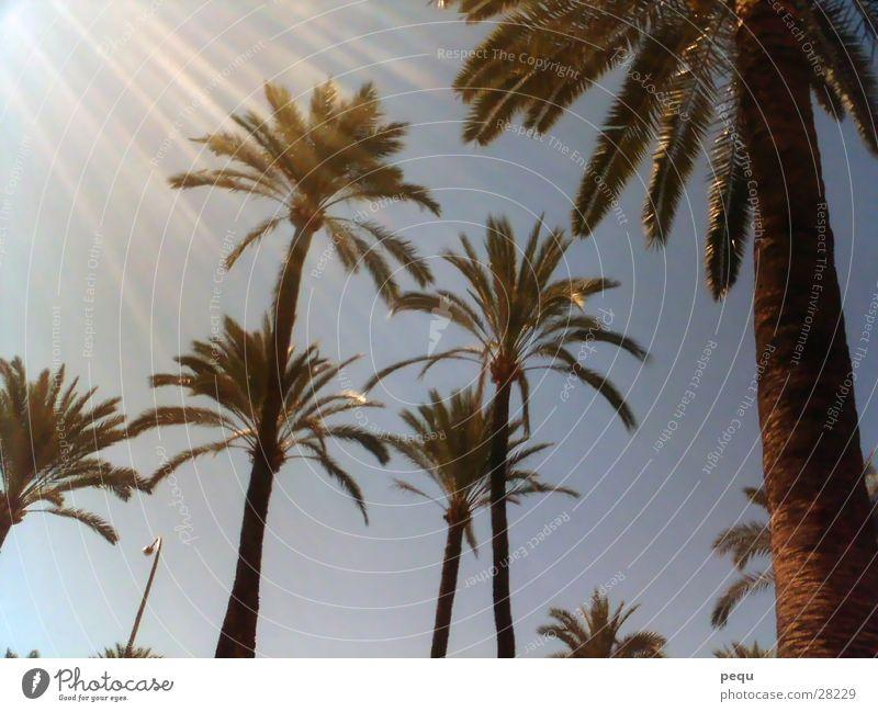 sunpalm Sonne Strand Europa Palme