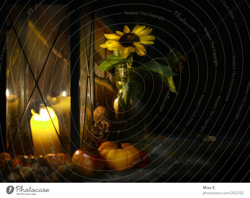 Herbst I Blume dunkel Blüte Feste & Feiern Frucht Lebensmittel leuchten Ernährung Kerze Apfel Laterne Sonnenblume Lampion herbstlich Halloween