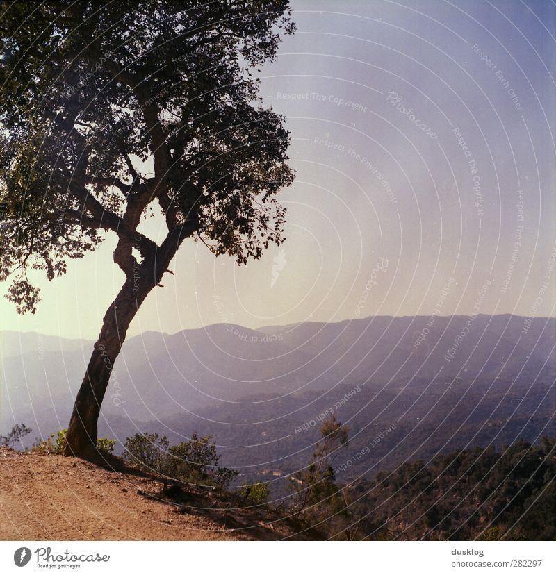 Spanien Natur Landschaft Pflanze Tier Himmel Sonne Sommer Schönes Wetter Baum Wald Hügel Erholung wandern exotisch heiß blau Zufriedenheit Lebensfreude ruhig