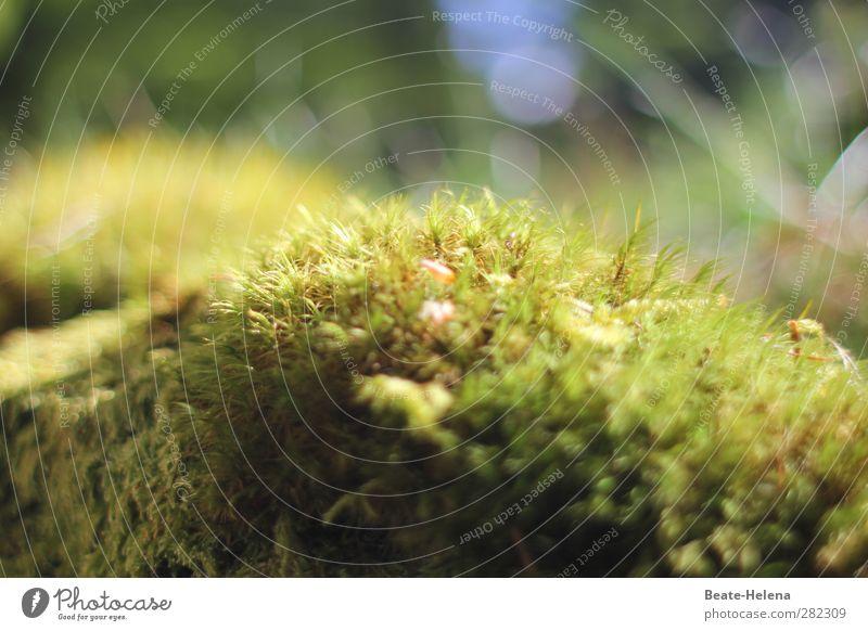 Sitzgelegenheit | das weiche Mooskissen Natur blau grün Pflanze Wald Umwelt Wetter natürlich sitzen kuschlig wählen Kissen Waldboden Sporen